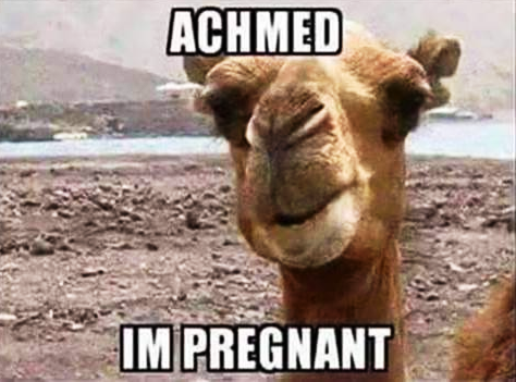achmed-im-pregnant