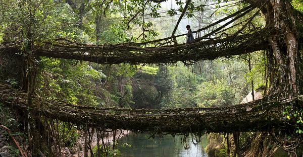 the-living-bridge