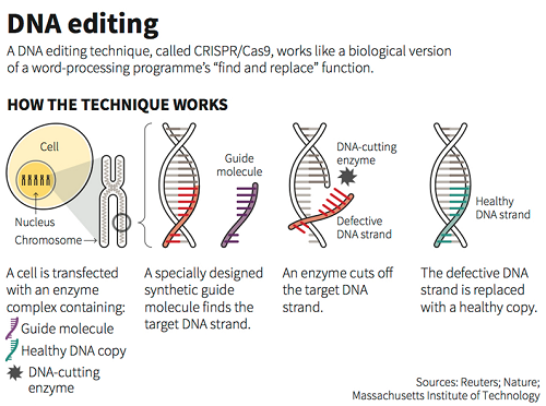 dna-editing