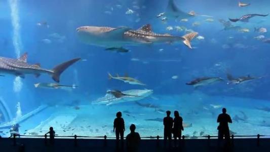 lisbon-oceanarium