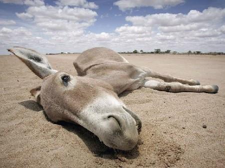 dead-donkey
