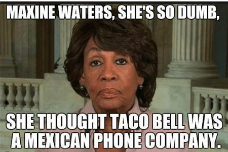 maxine-is-tacos