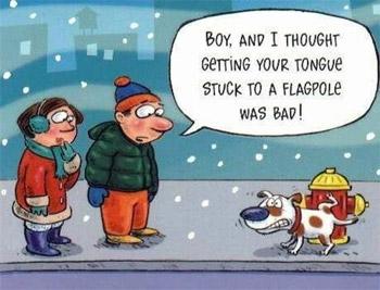 funny-dog-stuck