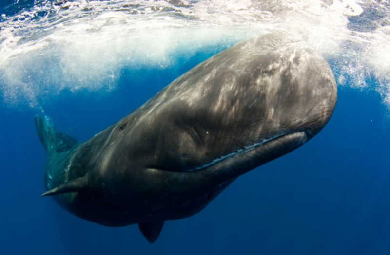 mommy-whale