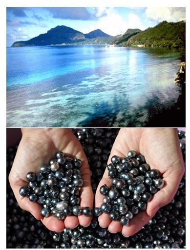 pitcairn-black-pearls