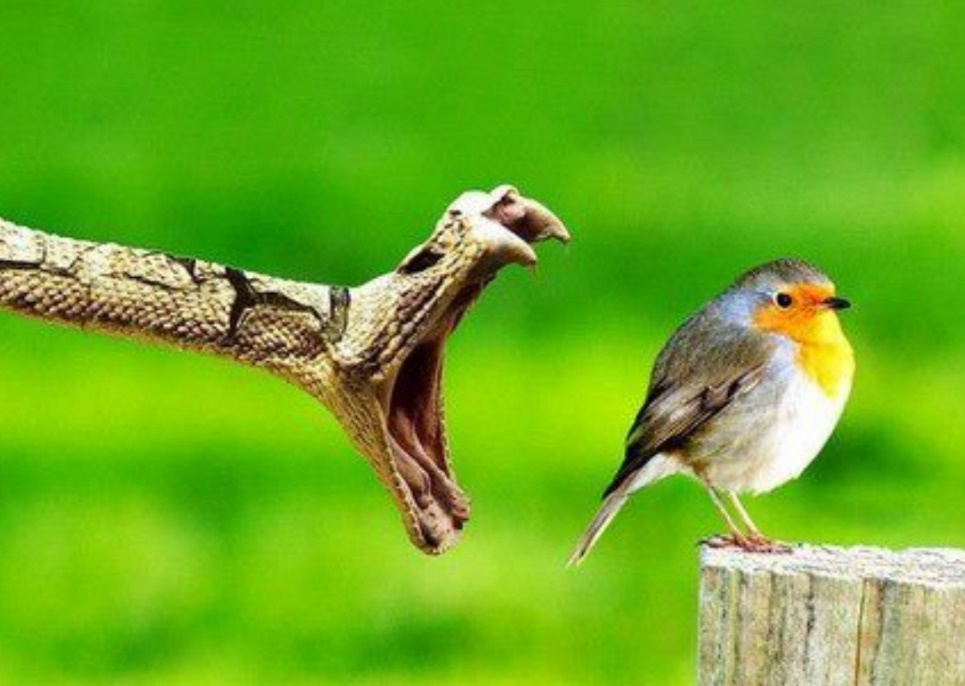 snake-attacks-bird