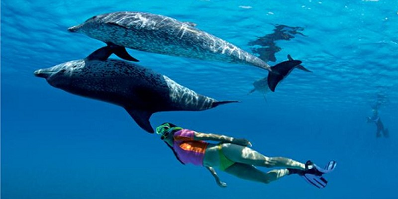 swimming-w-dolphins