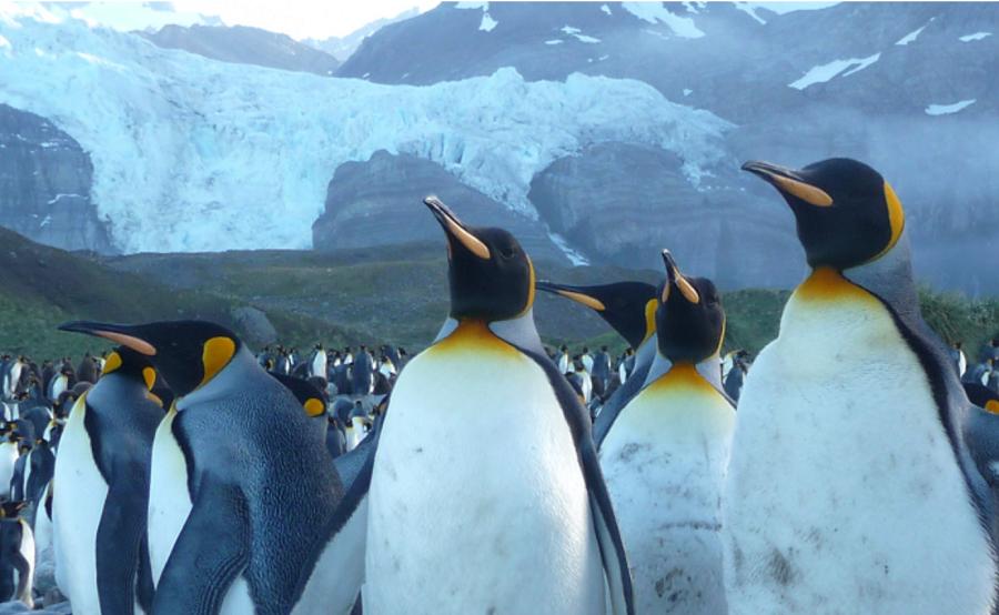 million-s-georgia-penguins