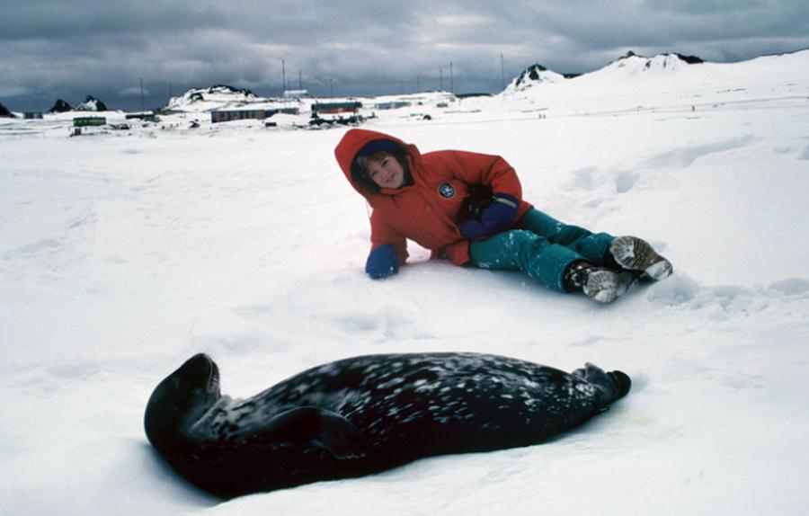 rh-and-elephant-seal