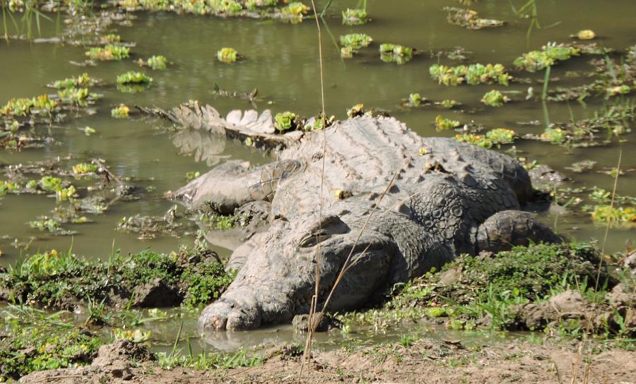 flat-dog-croc