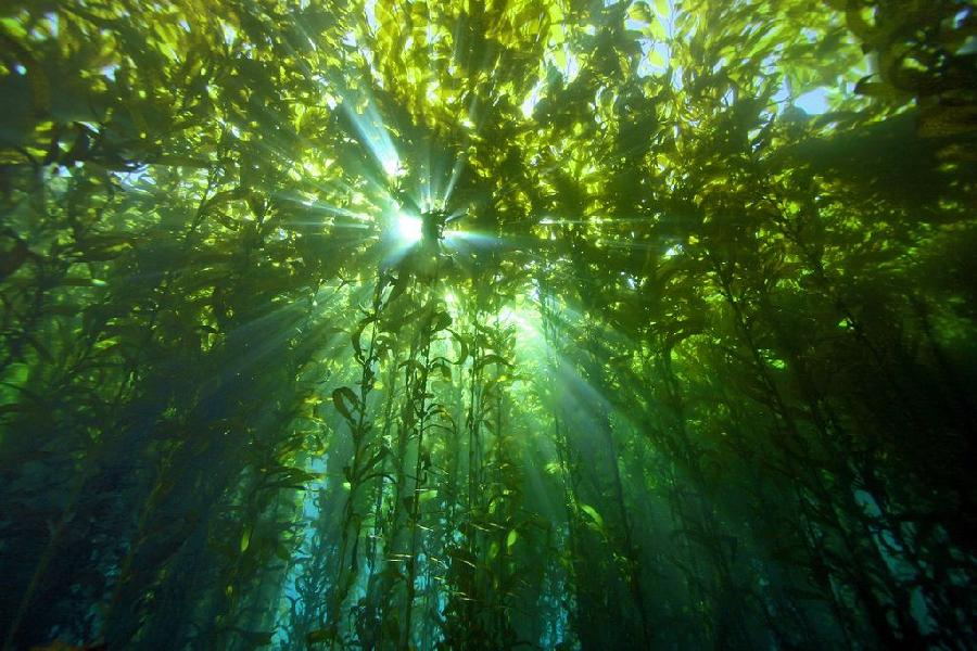 underwater-catalina-island